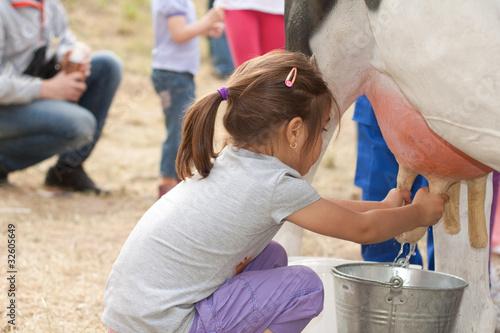 Fotografie, Obraz  Milking cow 5