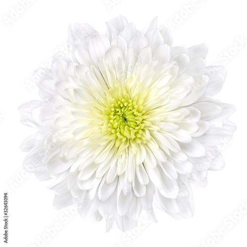 Poster de jardin Dahlia White Chrysanthemum Flower with Yellow Center Isolated