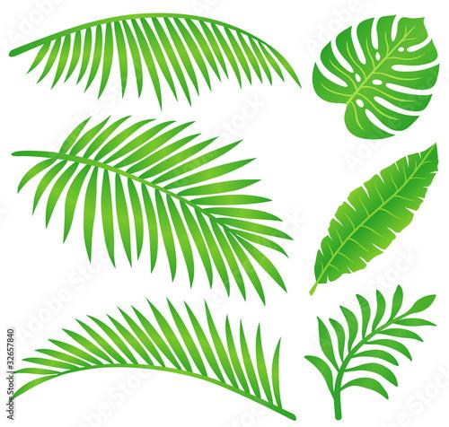 Láminas  summer leaf