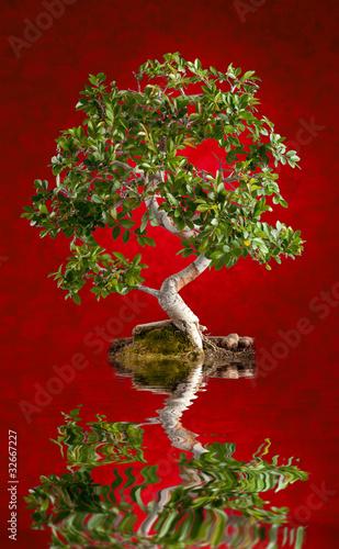 drzewko-bonsai-na-czerwonym-tle