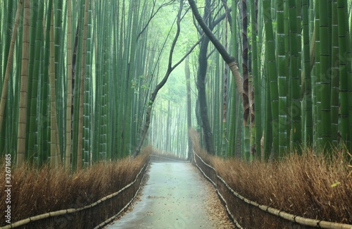 Photo Stands Road in forest 竹林の小道