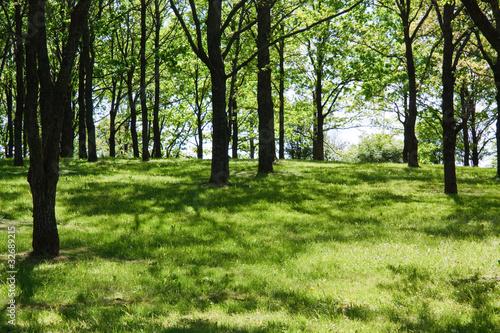 Spoed Foto op Canvas Green Meadow in the park