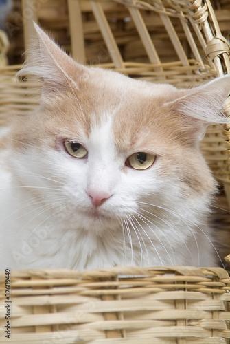 Tela  Gato en canasta ojos amarillos