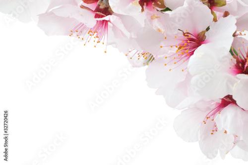 Cadres-photo bureau Fleur de cerisier Kirschblüte