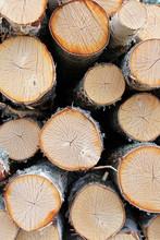 Cut Birch Logs Background