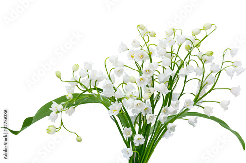 Photo Stands Lily of the valley May Lily