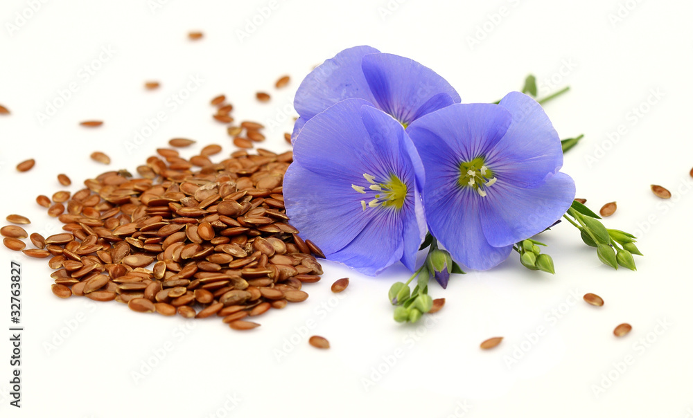 Fototapety, obrazy: Seeds and flowers of flax