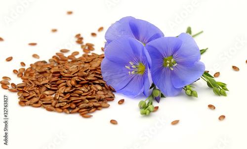Obraz Seeds and flowers of flax - fototapety do salonu