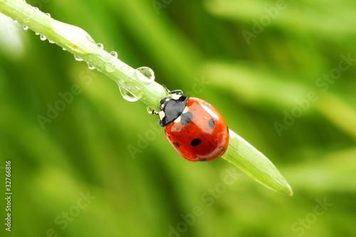 Naklejki zwierzęta biedronka-na-trawie