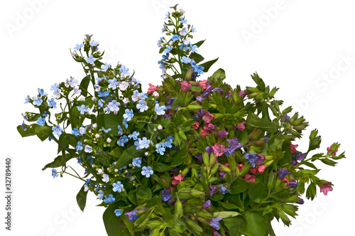Fototapety, obrazy: spring bouquet - forget-me-not and lungwort