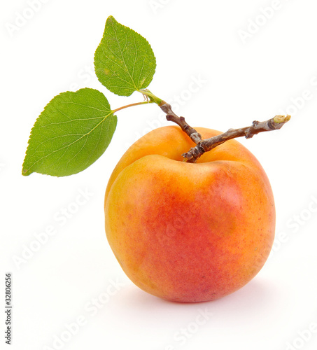 Photo Apricot with leaves