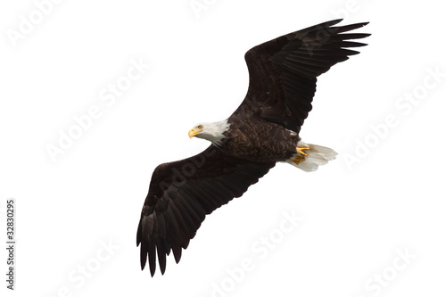 Foto op Plexiglas Eagle spread wing bald eagle soars across the sky