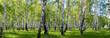 Leinwandbild Motiv summer birch forest landscape