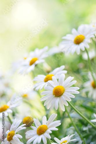 Naklejka - mata magnetyczna na lodówkę daisy