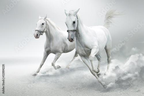 Obraz Białe konie - fototapety do salonu