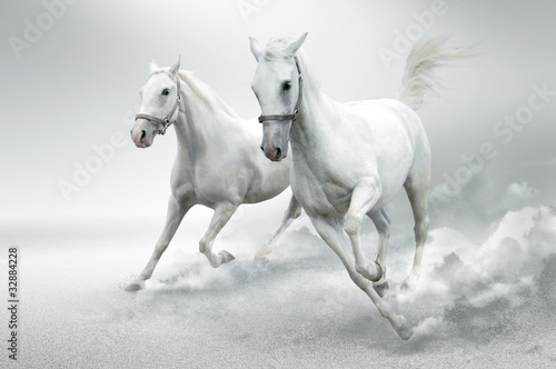 biale-konie