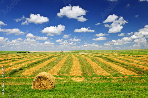 Wheat farm field at harvest Fototapeta