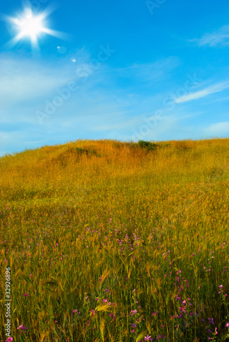 Canvas Prints Honey Sunny landscape