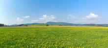 Panorama Of Fresh Green Meadows