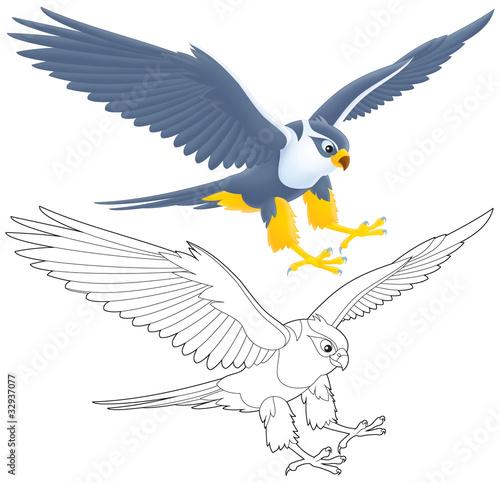 Photo  flying falcon