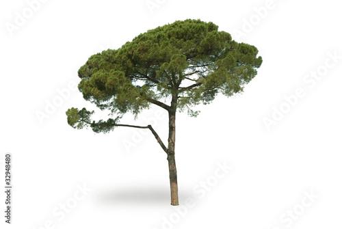 Fotomural pine