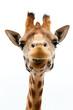 canvas print picture - Funny Giraffe