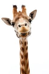 Smiješna žirafa