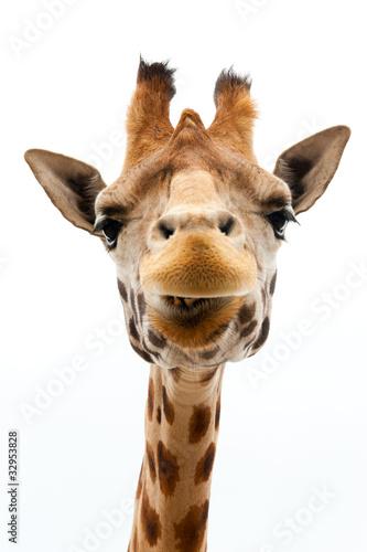 In de dag Giraffe Funny Giraffe