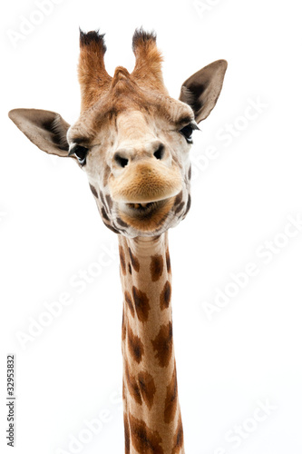 Photo  Funny Giraffe
