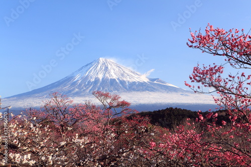 Spoed Foto op Canvas Japan Mt. Fuji with Japanese Plum Blossoms