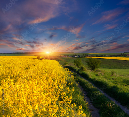 Summer Landscape with a field of yellow flowers. Sunrise