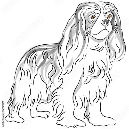 Valokuvatapetti Cavalier King Charles Spaniel Drawing