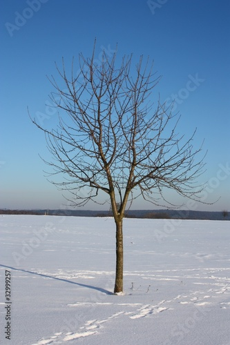 einzelner baum im winter buy this stock photo and explore similar images at adobe stock. Black Bedroom Furniture Sets. Home Design Ideas