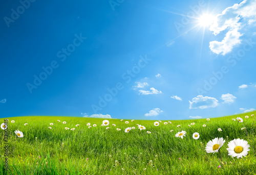 Wall Murals Meadow daisy