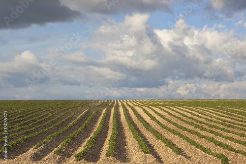 Garden Poster Culture potato field