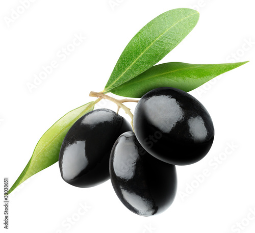 Isolated olives. Three black olive fruits on a branch with leaves isolated on white background