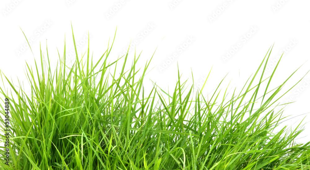 Fototapety, obrazy: fresh spring green grass i