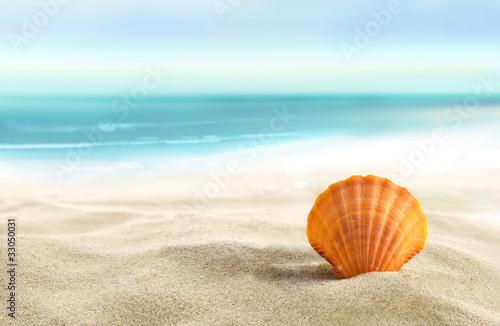 Foto Rollo Basic - Shell on the beach (von silvae)