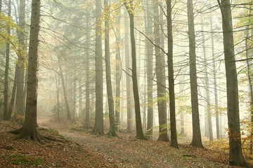 Mountain trail leading through a misty spring forest