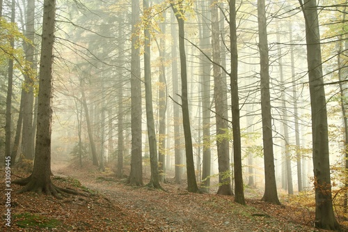 Papiers peints Foret brouillard Mountain trail leading through a misty spring forest