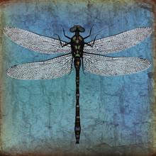 Dragonfly Grunge Background