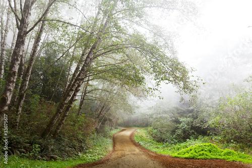 Obrazy tajemniczy ogród mgla-w-lesie