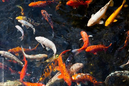Obraz na płótnie Fishpond