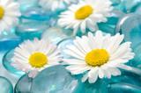 Daisy Flowers on Blue Glass Stones