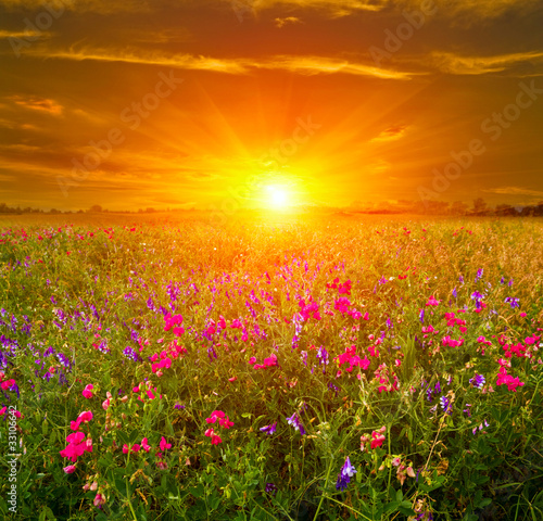 Fototapety, obrazy: sunset in steppe