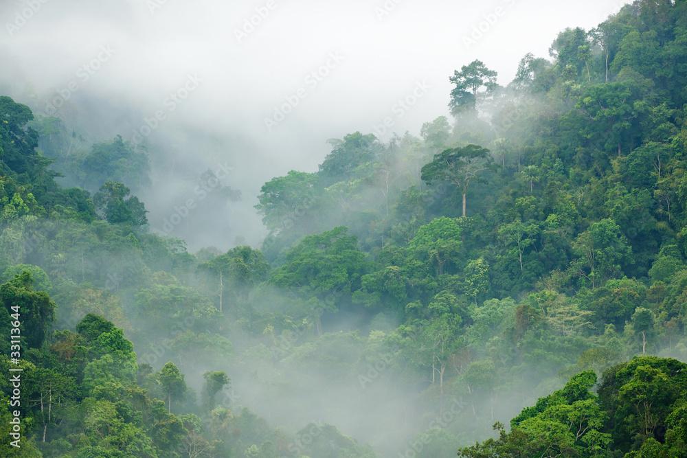 Fototapeta rainforest morning fog
