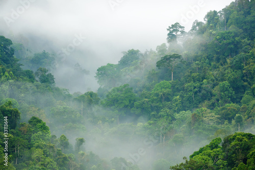 Türaufkleber Dschungel rainforest morning fog