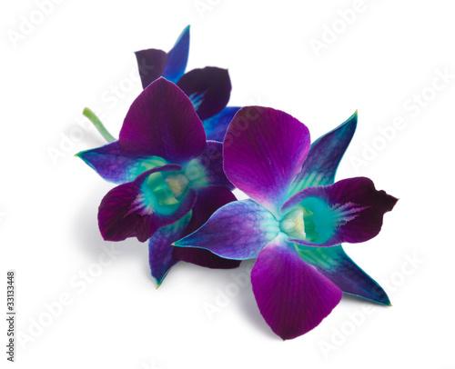 Spoed Foto op Canvas Orchidee orchid