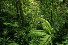 Dense Tropical Rain Forest