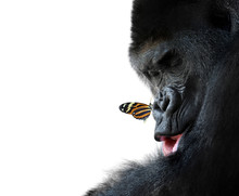 Gorilla And Butterfly Animal F...